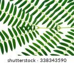 green leaf on white background.   Shutterstock . vector #338343590