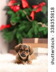 Stock photo cute puppy on carpet on christmas background 338355818