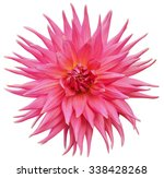 pink dahlia flower isolated on...   Shutterstock . vector #338428268