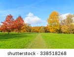 A View Of A Colorful Tree In A...