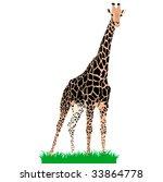 african animals 3   vector... | Shutterstock .eps vector #33864778