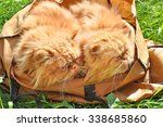 The Same Red Funny Cats In A Bag