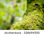 Moss  Leaf On Moss  Forest Mos...