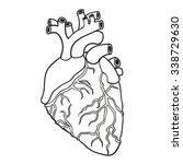human heart. vector... | Shutterstock .eps vector #338729630