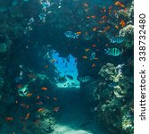 Coral And Fish In The Sea At...