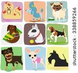 nine different dog breeds set.... | Shutterstock .eps vector #338859266