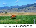 Lone Horse Grazes Green Pastur...