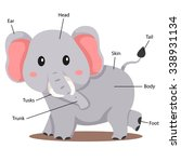 illustrator of elephant body...   Shutterstock .eps vector #338931134