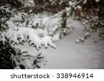 Winter Fir Trees In Snow