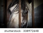 Close Up Of A Horse Behind The...