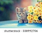 Cute Little Cat Sitting Near...