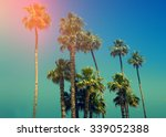 palm trees against sky at sunset | Shutterstock . vector #339052388