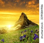 Beautiful mountain Matterhorn in the foreground blooming gentian at sunset, Pennine Alps, Switzerland - stock photo