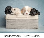 Stock photo cute puppy 339136346