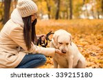 Stock photo portrait of a beautiful young woman with her dog while walking in the autumn park 339215180