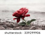one red rose flower at the... | Shutterstock . vector #339299906