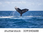 a humpback whale  megaptera...   Shutterstock . vector #339340688