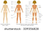 female body   back  surface... | Shutterstock .eps vector #339356828