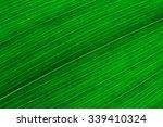 leaf texture.  leaf texture. | Shutterstock . vector #339410324