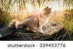 Toned Photo Of Cat Sitting On...