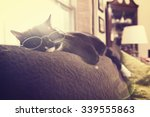 Black And White Cat Sleeping In ...