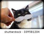 Social Media Cat With A Paper...