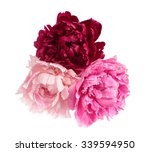 three different color peonies ... | Shutterstock . vector #339594950