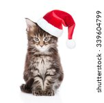 Maine Coon Cat In Red Santa Hat ...