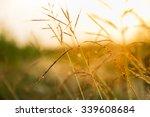 grass flowers. spring...   Shutterstock . vector #339608684