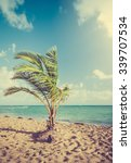 Palm Tree And Caribbean Sea In...