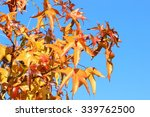 leaves and blue sky | Shutterstock . vector #339762500