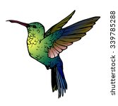 vector illustration of colibri | Shutterstock .eps vector #339785288