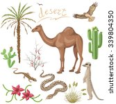 Set Of Desert Plants And...