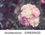 Flowers Rose With Filter Effec...