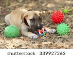 dog toys is a cute puppy dog... | Shutterstock . vector #339927263