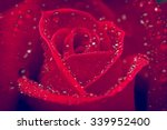 Beautiful Red Rose And Water...