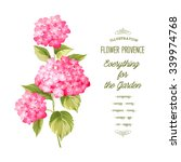 hortensia flower. red realistic ... | Shutterstock .eps vector #339974768
