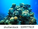 Underwater Tropical Sea View