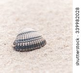 Small photo of closeup of a common cockle, Cardiidae, on a beach with space for text