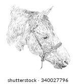 horse head sketch  | Shutterstock .eps vector #340027796