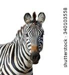 zebra isolated on white... | Shutterstock . vector #340103558