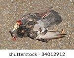 Dead Pigeon On The Tarmac