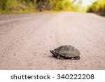 turtle walking on a country... | Shutterstock . vector #340222208