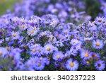 Small Purple Asters Wildflowers ...