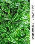 beautiful flower garden of doi... | Shutterstock . vector #340244444