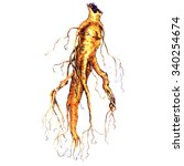 ginseng root isolated on white | Shutterstock . vector #340254674