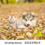 Stock photo portrait of a puppy and a kitten for a walk in the autumn park 340259819