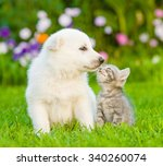 Stock photo puppy and kitten kissing on the green lawn 340260074