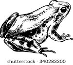 anuran   toad  frog  toad... | Shutterstock .eps vector #340283300