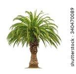 Green Beautiful Palm Tree...